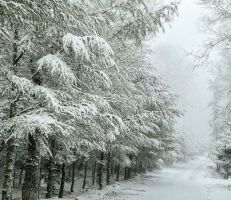 شركة النقل الداخلي في اللاذقية تسير باصات لنقل الأهاليالراغبين بالاستمتاع بثلج صلنفة